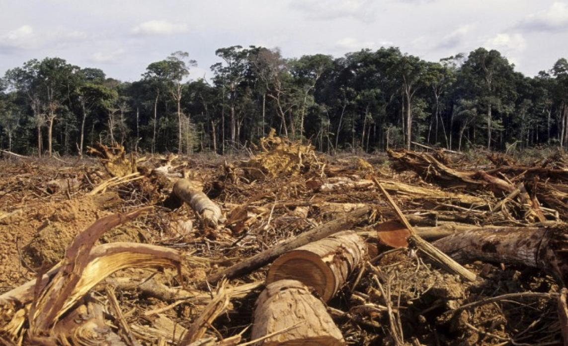 Waarom ecologische en duurzame gevelbekleding?